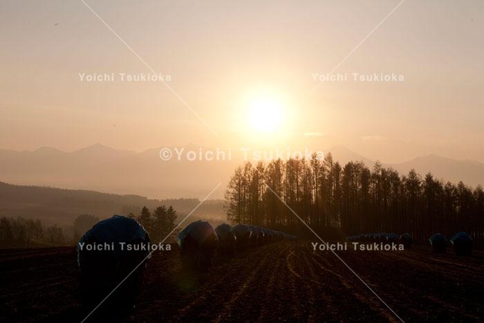 豆ニオが並ぶ秋の美瑛大地